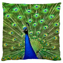 Bird Peacock Large Cushion Case (two Sides)