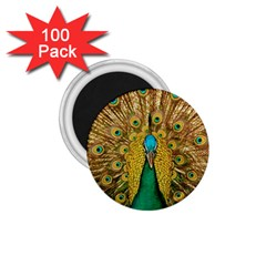 Bird Peacock Feathers 1 75  Magnets (100 Pack)