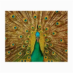 Bird Peacock Feathers Small Glasses Cloth
