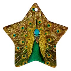 Bird Peacock Feathers Star Ornament (two Sides)