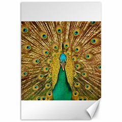 Bird Peacock Feathers Canvas 12  X 18