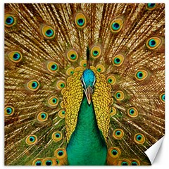 Bird Peacock Feathers Canvas 20  X 20