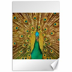 Bird Peacock Feathers Canvas 20  X 30