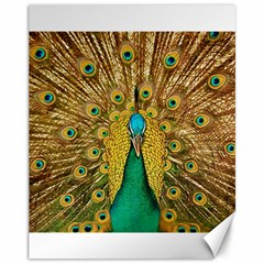 Bird Peacock Feathers Canvas 11  X 14