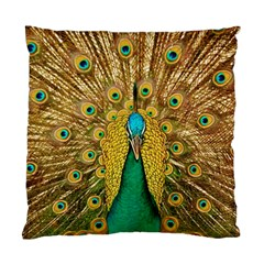 Bird Peacock Feathers Standard Cushion Case (two Sides)