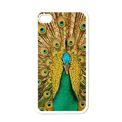 Bird Peacock Feathers Apple Iphone 4 Case (white)