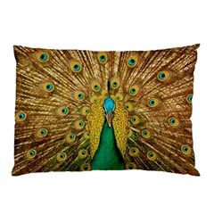 Bird Peacock Feathers Pillow Case (two Sides)