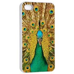 Bird Peacock Feathers Apple Iphone 4/4s Seamless Case (white)