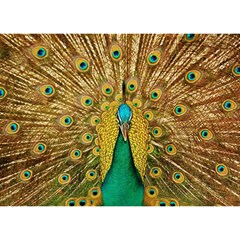 Bird Peacock Feathers Birthday Cake 3d Greeting Card (7x5)