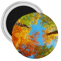 Colorful Leaves Sky 3  Magnets by AnjaniArt
