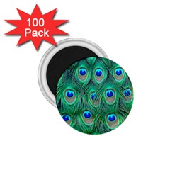 Peacock Feather 1 75  Magnets (100 Pack)  by AnjaniArt