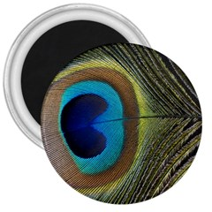 Single Peacock 3  Magnets by AnjaniArt