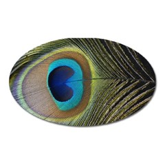Single Peacock Oval Magnet