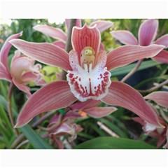 2017 Flower Calendar  By Mim   Wall Calendar 11  X 8 5  (12 Months)   6fkkiva18ndh   Www Artscow Com Month