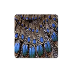 Feathers Peacock Light Square Magnet by AnjaniArt