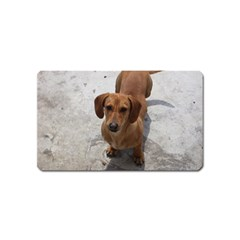 Dachshund Full Magnet (Name Card) by TailWags