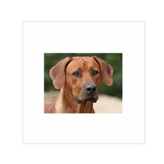 2 Rhodesian Ridgeback Small Satin Scarf (Square) by TailWags
