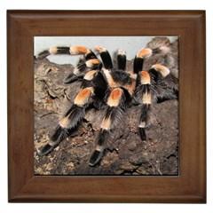 Tarantula Framed Tiles by TailWags