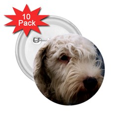 Sealyham Terrier 2.25  Buttons (10 pack)  by TailWags