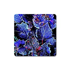 Blue Leaves In Morning Dew Square Magnet