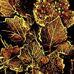 Leaves In Morning Dew,yellow Brown,red, Magic Photo Cubes