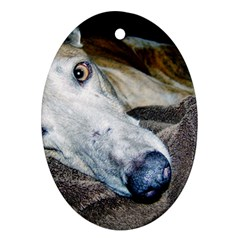 Greyhound 2 Ornament (Oval)  by TailWags