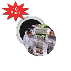 Two Miniature Schnauzers 1.75  Magnets (10 pack)  by TailWags