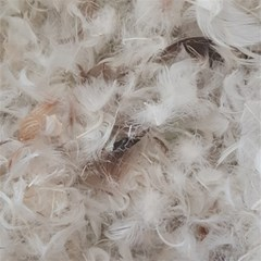 Down Comforter Feathers Goose Duck Feather Photography Magic Photo Cubes by yoursparklingshop