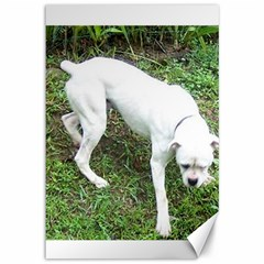 Boxer White Puppy Full Canvas 12  X 18   by TailWags