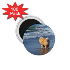 Chow Chow On Beach 1.75  Magnets (100 pack)  by TailWags