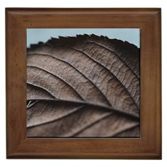 Leaf Veins Nerves Macro Closeup Framed Tiles by Amaryn4rt