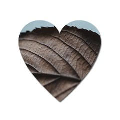 Leaf Veins Nerves Macro Closeup Heart Magnet by Amaryn4rt