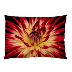 Bloom Blossom Close Up Flora Pillow Case (two Sides) by Amaryn4rt