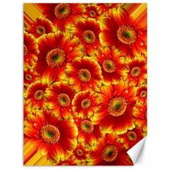 Gerbera Flowers Blossom Bloom Canvas 36  X 48   by Amaryn4rt