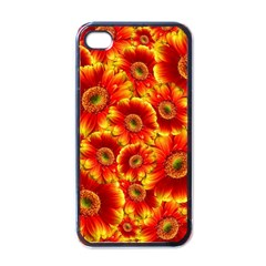 Gerbera Flowers Blossom Bloom Apple Iphone 4 Case (black) by Amaryn4rt