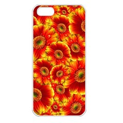 Gerbera Flowers Blossom Bloom Apple Iphone 5 Seamless Case (white) by Amaryn4rt
