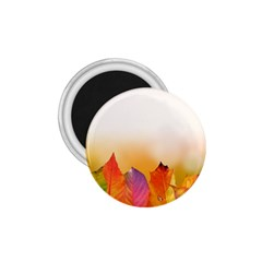 Autumn Leaves Colorful Fall Foliage 1 75  Magnets by Amaryn4rt