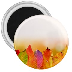Autumn Leaves Colorful Fall Foliage 3  Magnets by Amaryn4rt