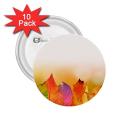 Autumn Leaves Colorful Fall Foliage 2 25  Buttons (10 Pack)  by Amaryn4rt