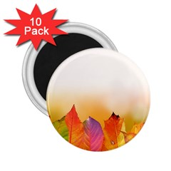 Autumn Leaves Colorful Fall Foliage 2 25  Magnets (10 Pack)  by Amaryn4rt