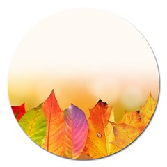 Autumn Leaves Colorful Fall Foliage Magnet 5  (round) by Amaryn4rt