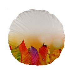 Autumn Leaves Colorful Fall Foliage Standard 15  Premium Round Cushions by Amaryn4rt