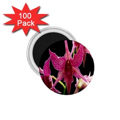 Orchid Flower Branch Pink Exotic Black 1 75  Magnets (100 Pack)  by Jojostore