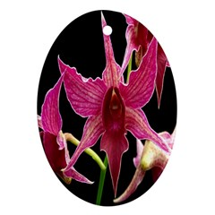 Orchid Flower Branch Pink Exotic Black Oval Ornament (two Sides) by Jojostore
