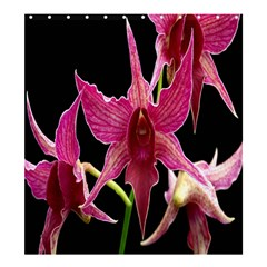 Orchid Flower Branch Pink Exotic Black Shower Curtain 66  X 72  (large)  by Jojostore