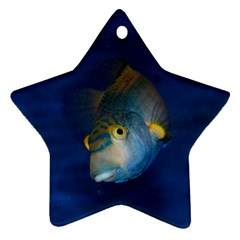 Fish Blue Animal Water Nature Ornament (star)