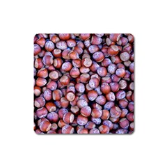 Hazelnuts Nuts Market Brown Nut Square Magnet by Amaryn4rt