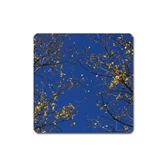 Poplar Foliage Yellow Sky Blue Square Magnet by Amaryn4rt