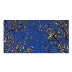 Poplar Foliage Yellow Sky Blue Satin Shawl by Amaryn4rt