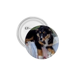 Australian Shepherd Black Tri Puppy 1.75  Buttons by TailWags